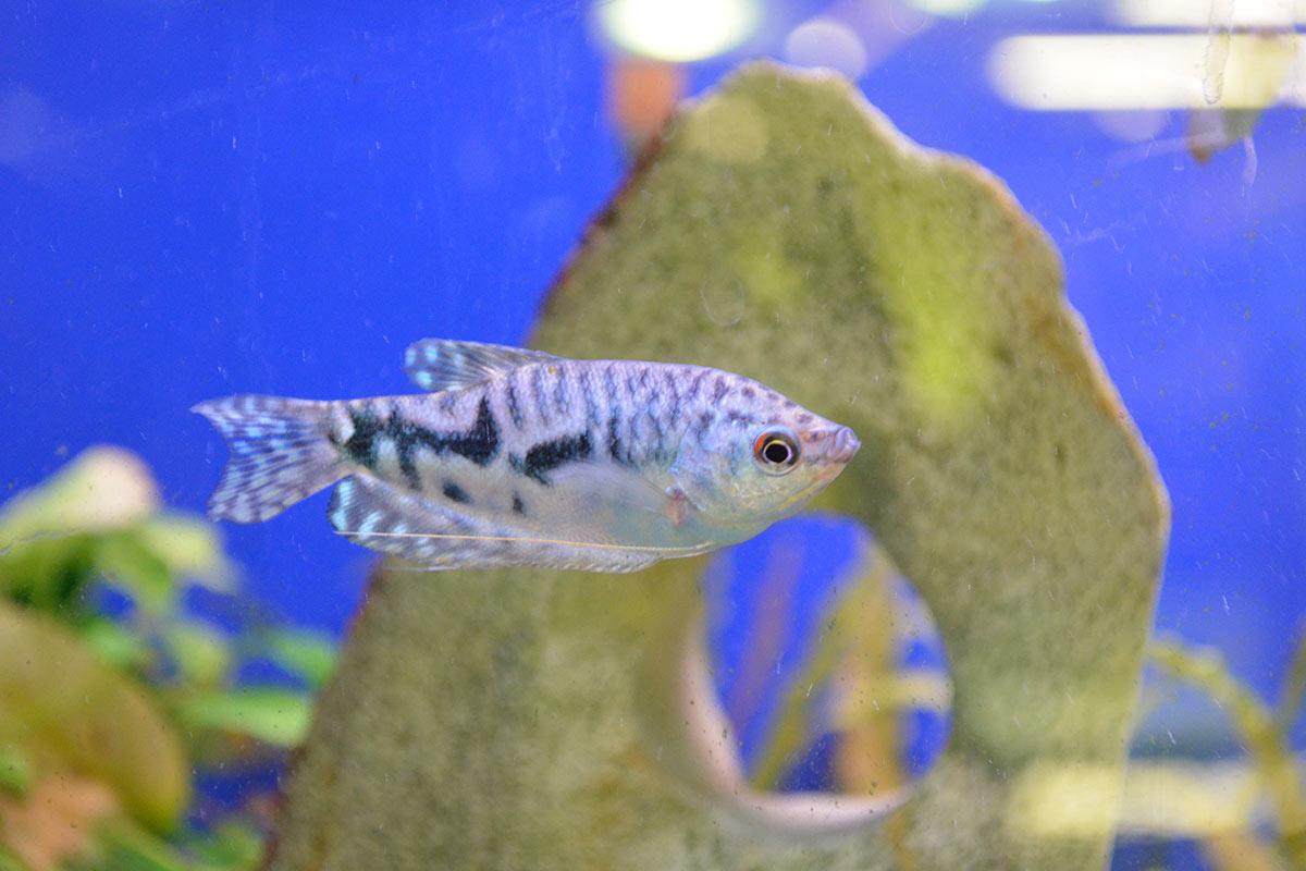rund_ums_tier_aquarium